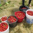 Gleaning project manager sought