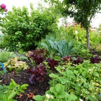 Public input request on Urban Agriculture Plan