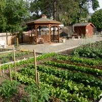 Community Gardens gearing up!