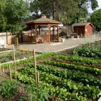 Community Gardens gearing up!